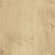 dub přírodní